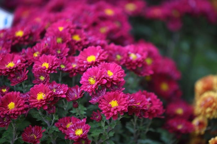 Flori 022