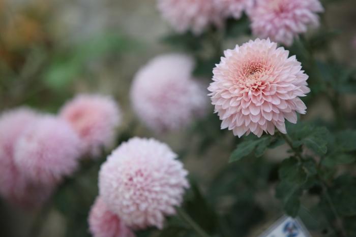 Flori 040