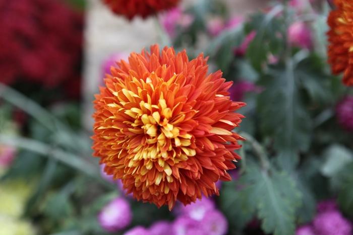 Flori 153