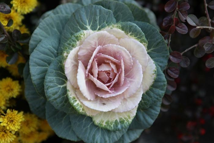 Flori 168