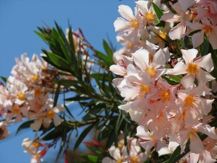 Flori 243