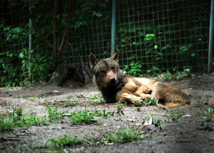 Zoo-Sibiu
