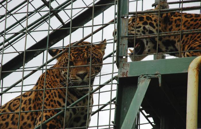 Zoo-Sibiu2