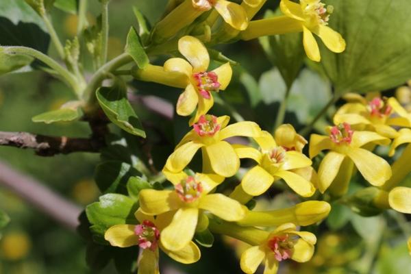 Flori-Cuisor02