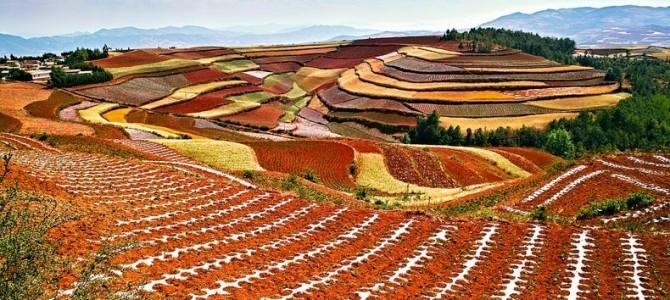 Spectaculoasele terase de pământ roşu de la Dongchuan