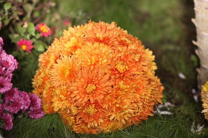 Flori 128