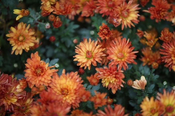 Flori 192