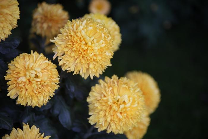 Flori 195