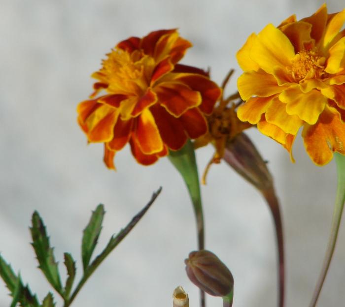 Flori 273