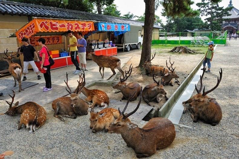 Nara1