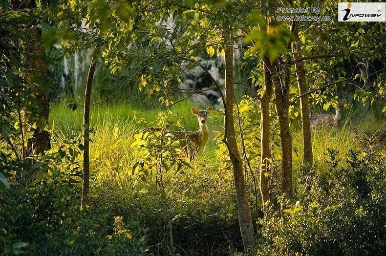 Sundarbans1
