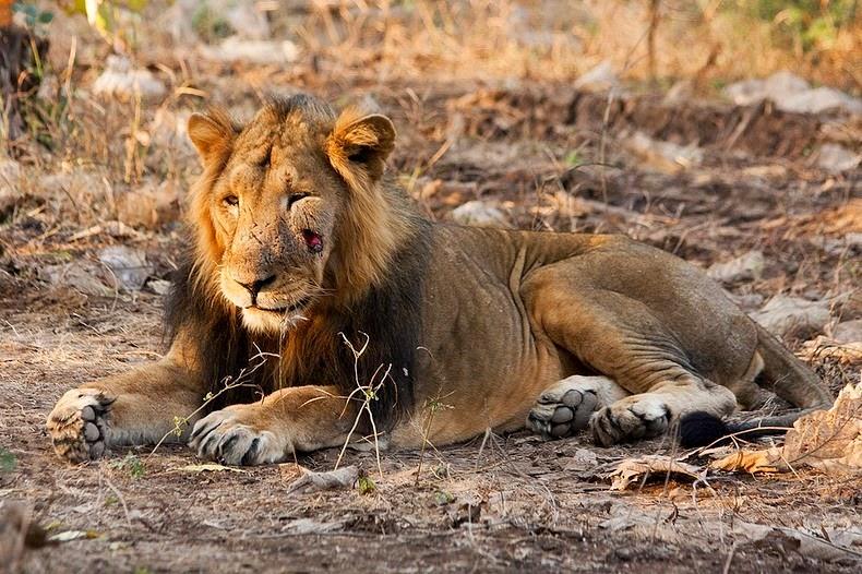 animale-India2