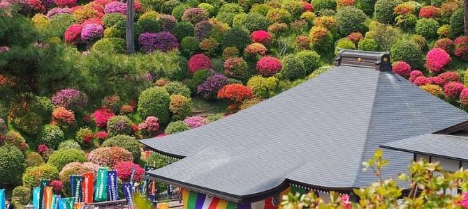 Azaleele de la Templul Shiofune Kannon-ji din Japonia
