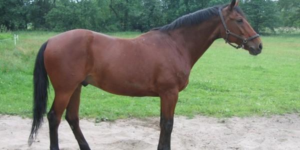 20 de cai Furioso North Star vor intra în dresaj şi vor fi scoşi la vânzare