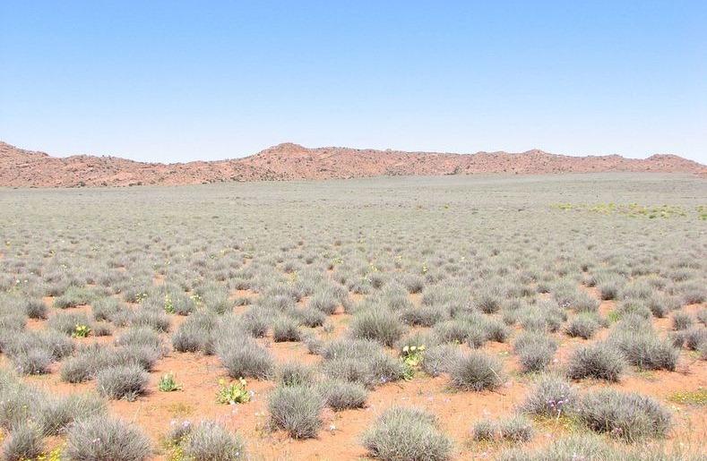 Namaqualand-flori2