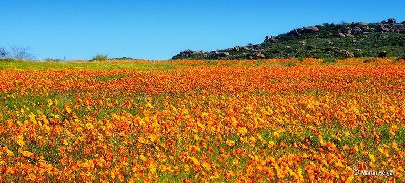 Namaqualand-flori3