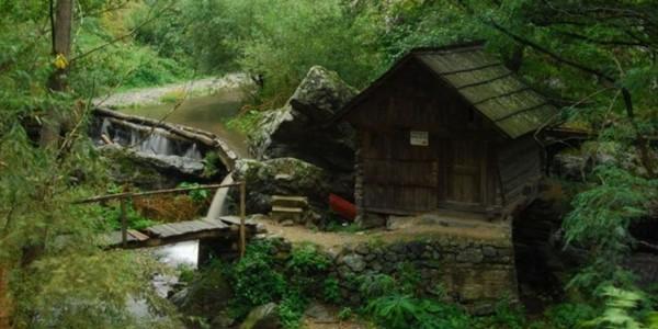 CARAŞ-SEVERIN: Rezervaţia mulinologică de la Rudăria