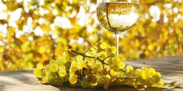"""Feteasca albă, vinul a cărui """"aromă aminteşte de parfumul florilor de viţă"""""""
