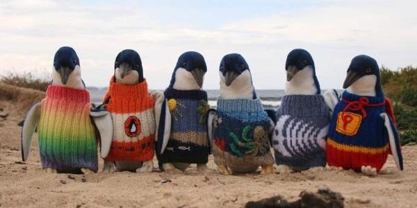 Un australian de 109 de ani tricotează pulovere pentru pinguini