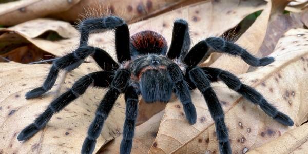 Muzeul Antipa: Expoziţie de păianjeni şi scorpioni vii