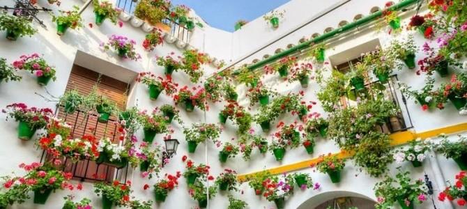 Cordoba: festivalul curţilor interioare încărcate cu flori