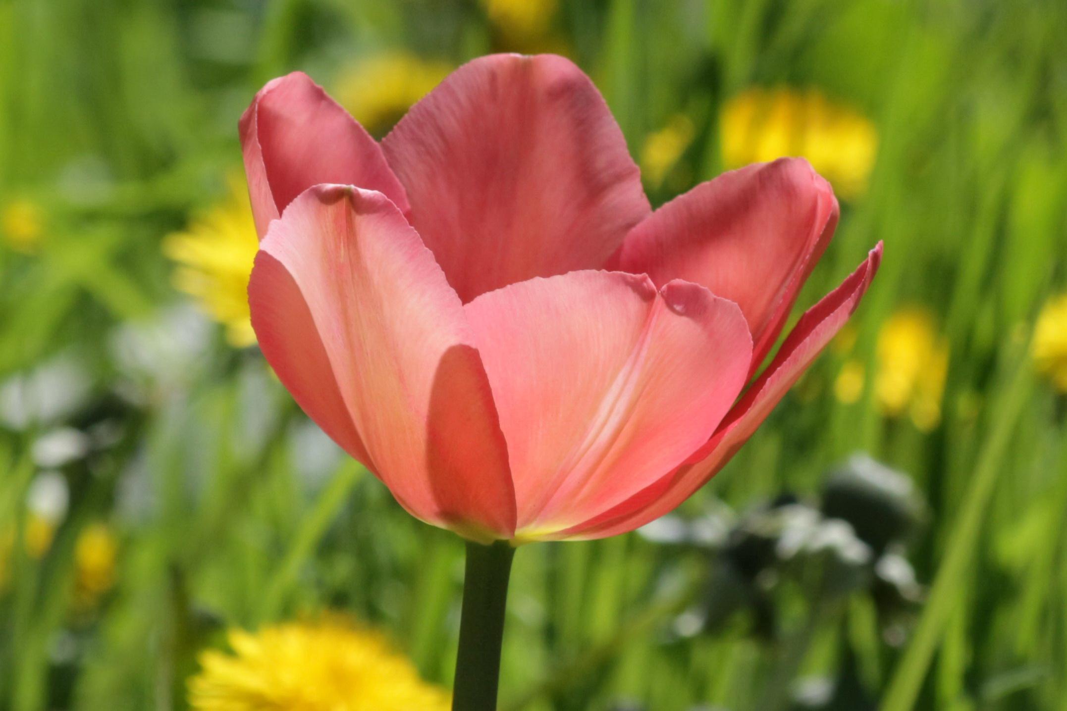 Flori-lalea07