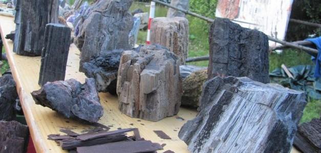 Muzeul de lemn pietrificat de la Gărâna