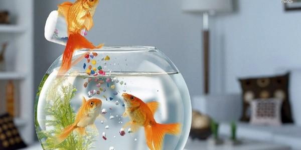PEŞTII sunt invitaţi să pescuiască 3 PREMII!