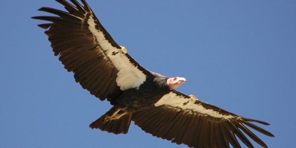 Cea mai rară specie de păsări din lume