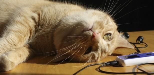 Muzica perfectă pentru… pisici