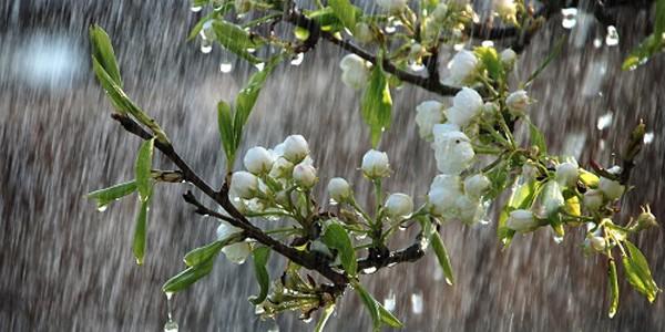 2-15 martie: vreme caldă, dar şi precipitaţii însemnate cantitativ