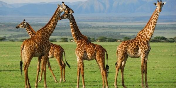 Parcul Naţional Serengeti