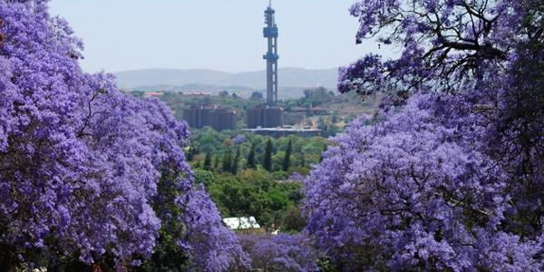 Pretoria: Oraşul Jacarandei