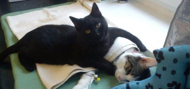 """""""Pisica infirmieră"""" are un milion de admiratori pe internet"""