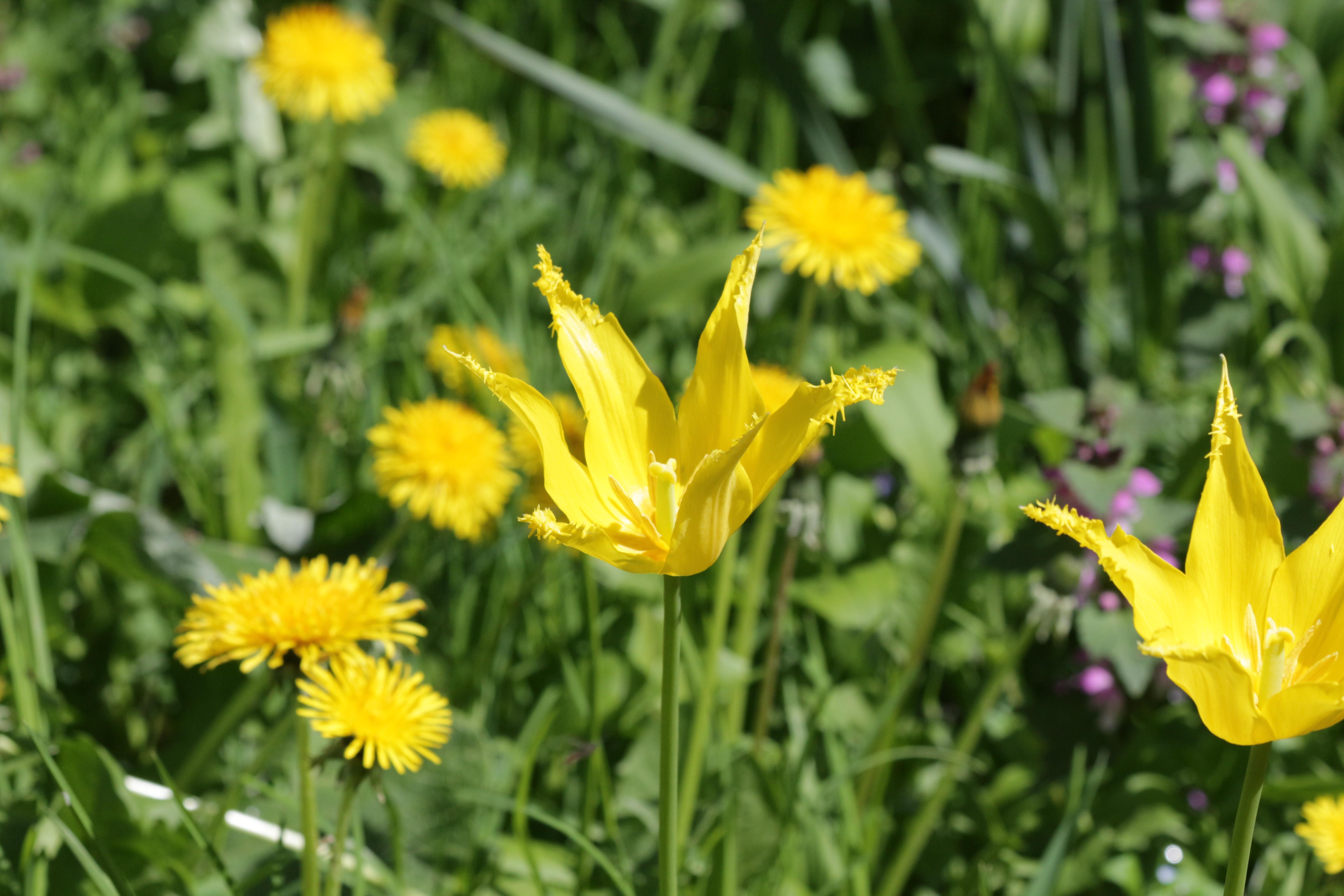 Flori-Lalea02