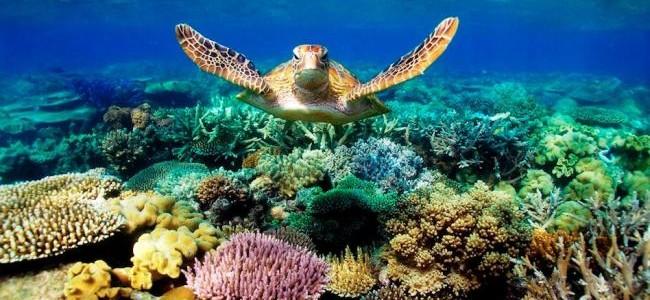 Cel mai lung recif de corali din lume