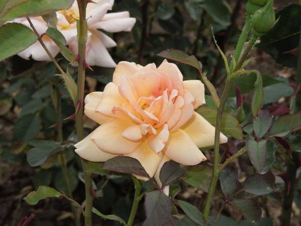 Flori 345