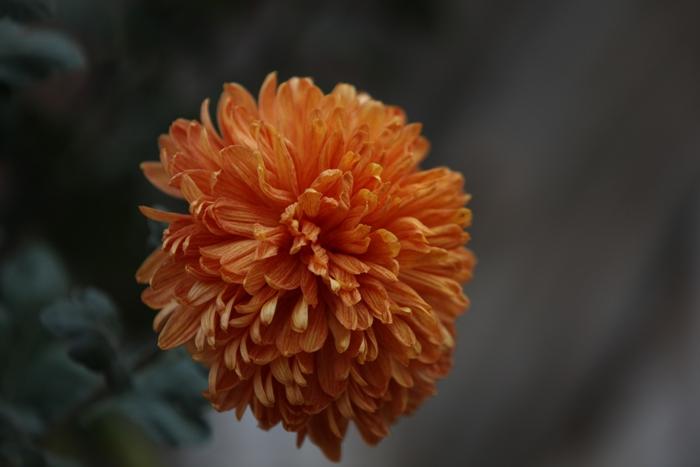 Flori 060