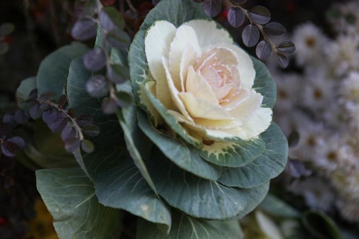 Flori 169