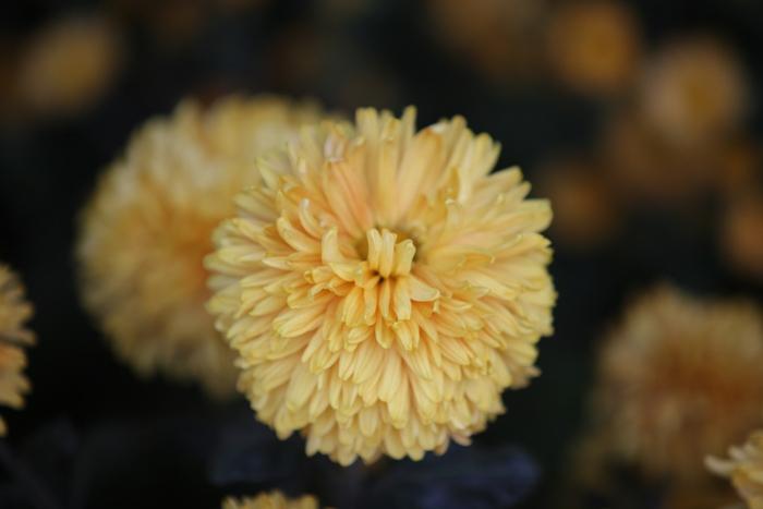 Flori 193