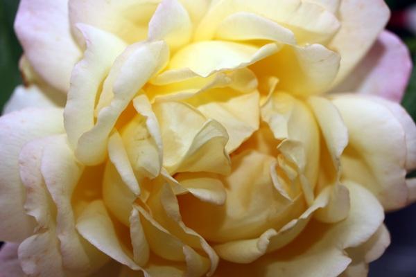 Flori 374