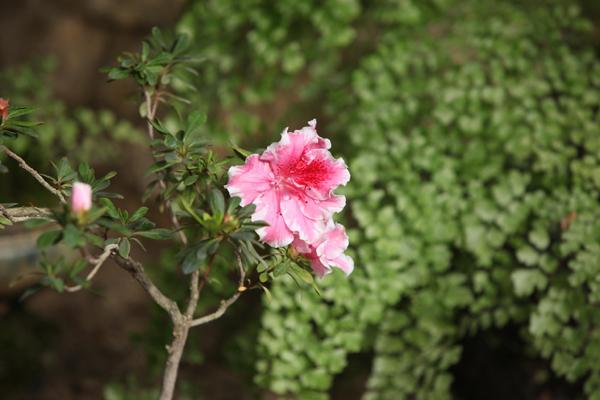 Flori 312