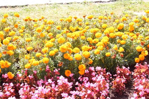 Flori 398