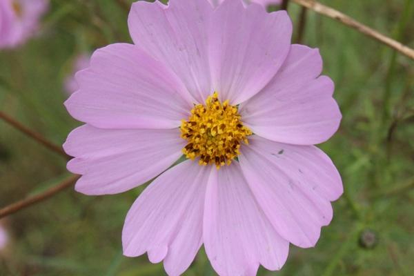 Flori 416
