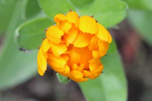 Flori 426