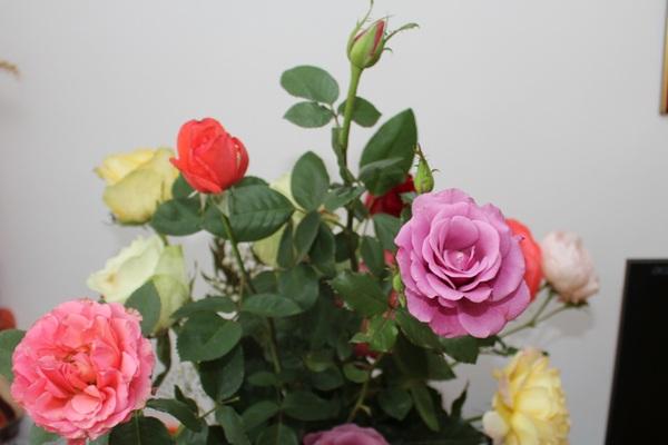 Flori 377