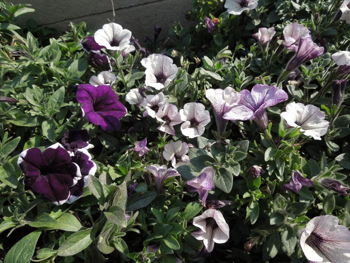 Flori 430