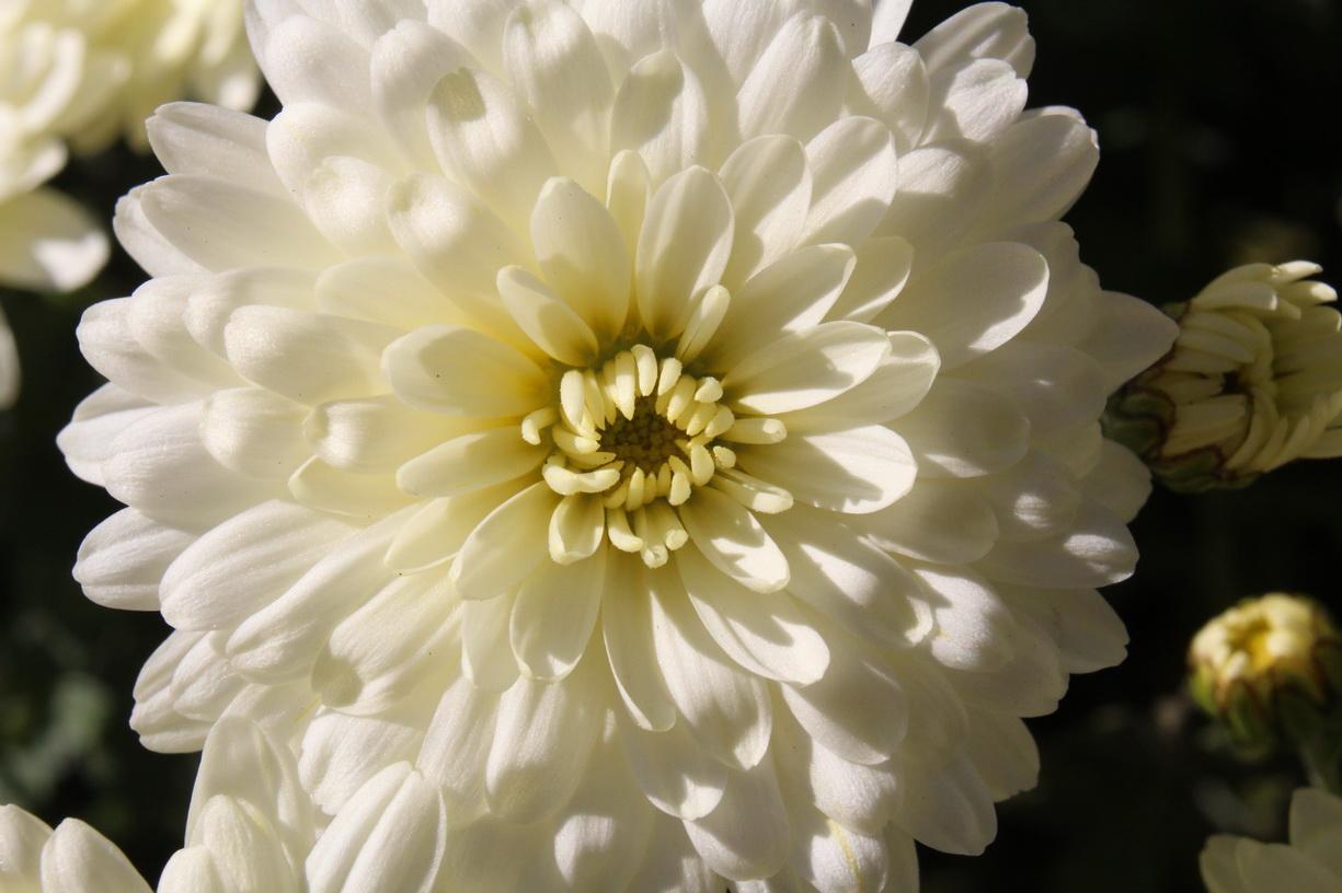 Flori 461