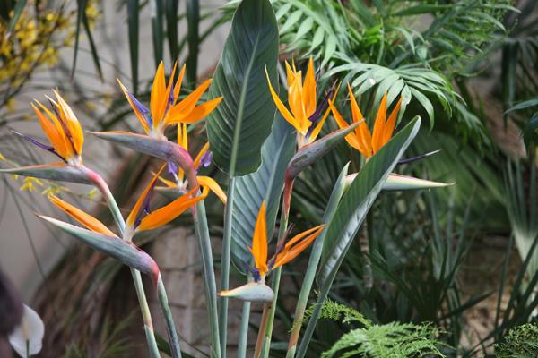 Flori 318