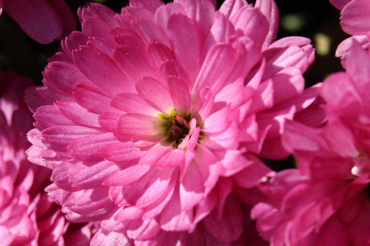 Flori 454
